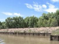 Video: El Delta del Paraná en peligro
